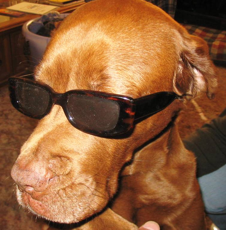 Cool Puppy